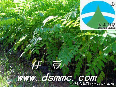 无忧花,轻木,红豆树,花梨木,降香黄檀,无患子,青钱钱,台湾相思,任豆树