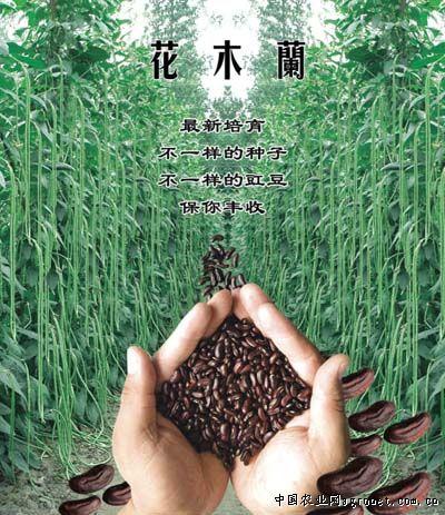 花木兰—豇豆种子