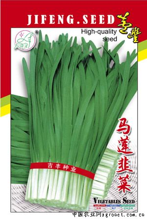 马莲韭菜—韭菜种子