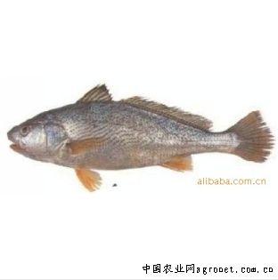 宁波海鱼的种类图