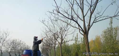 """河南开封:树木""""药浴""""防治病虫害(图)"""