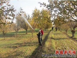 杏树病虫害防治工作