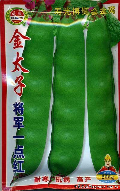 金太子将军一点红—菜豆种子