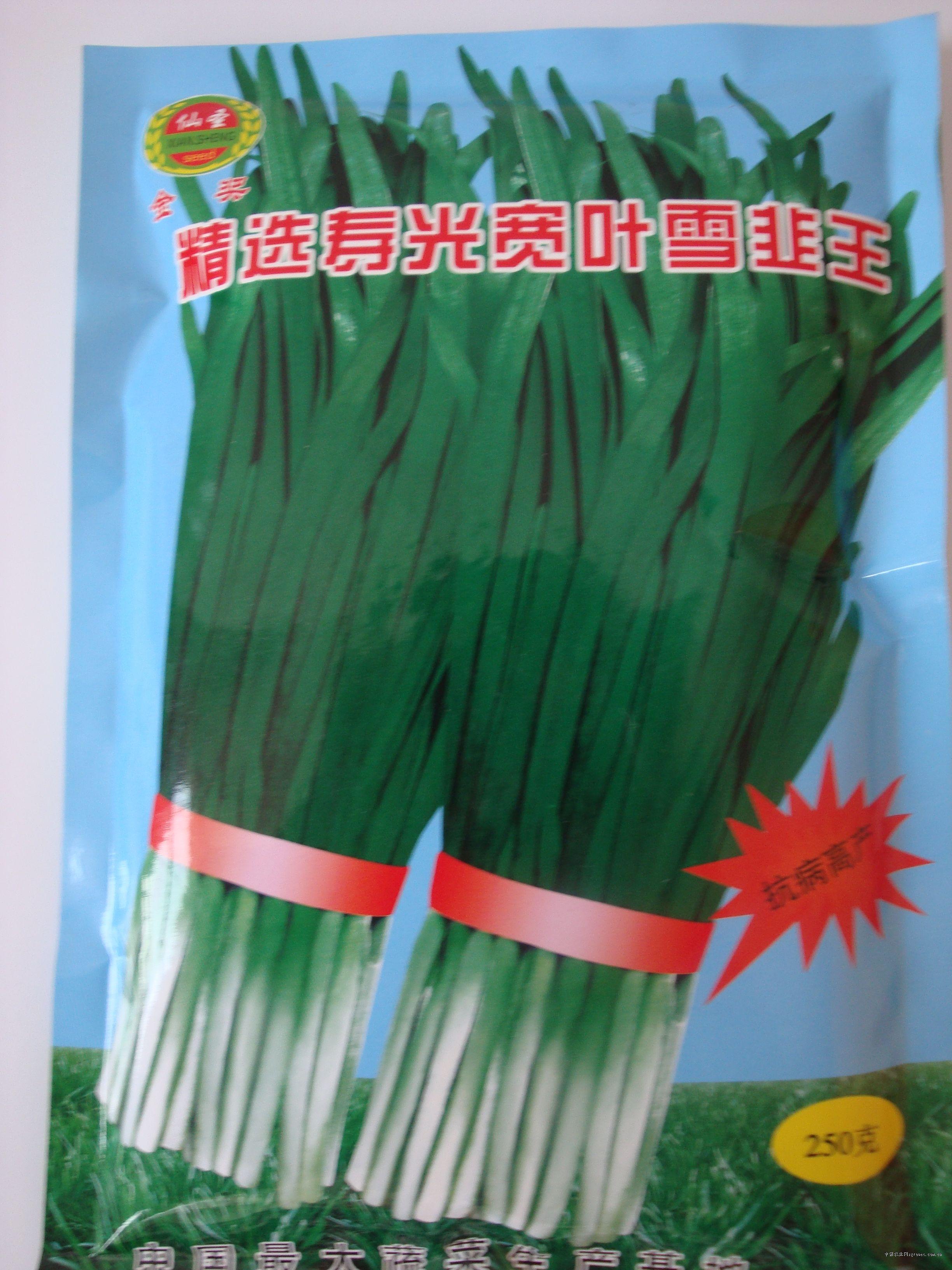 寿光精选雪韭—韭菜种子
