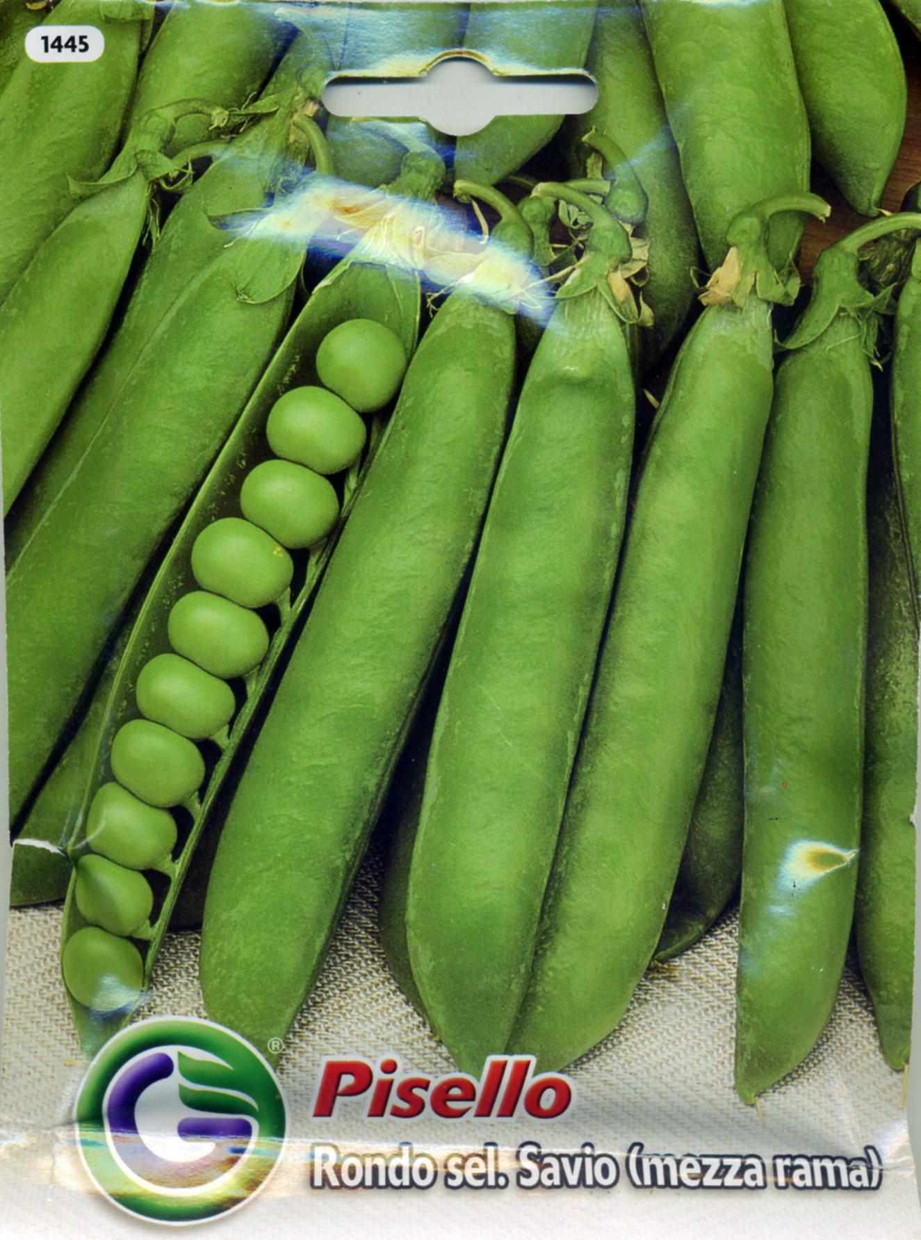 供应甜豌豆-豌豆种子