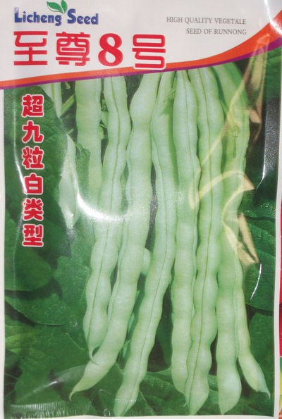 芸豆至尊8号—菜豆种子
