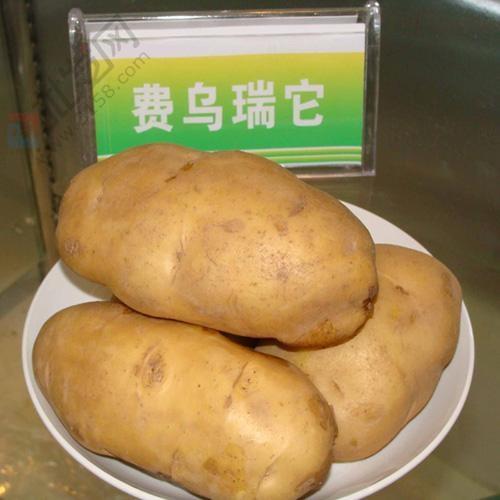 費烏瑞它—馬鈴薯種薯
