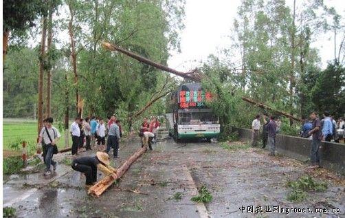 广东德庆多镇遭冰雹袭击 国道树木压大客车(图)