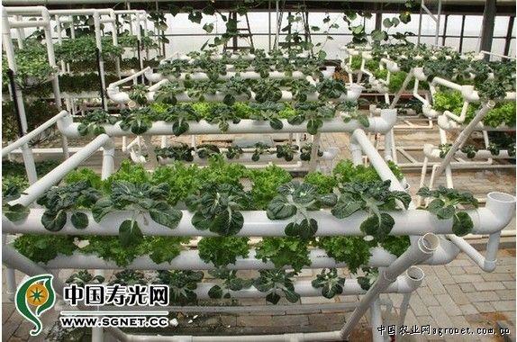 """""""新鲜蔬菜无冬夏,温室大棚有常春."""