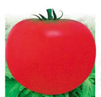 抗病402番茄-番茄種子