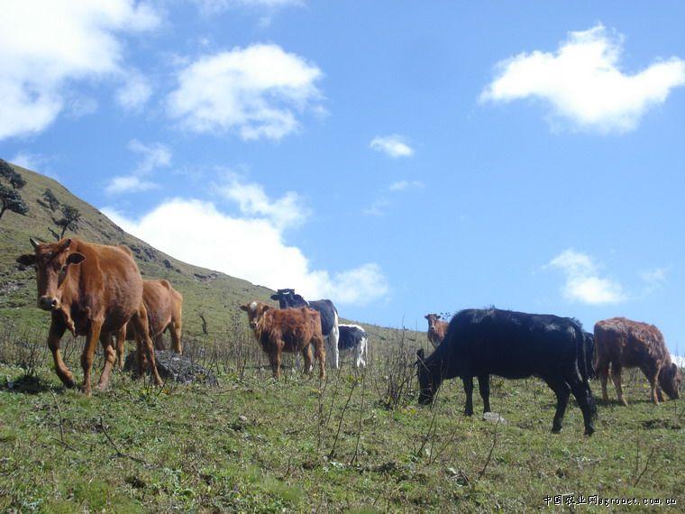 提升了草食畜牧业规模化水平