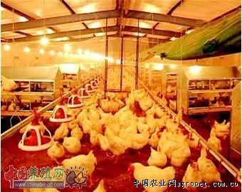 建立现代标准化鸡舍 高清图片