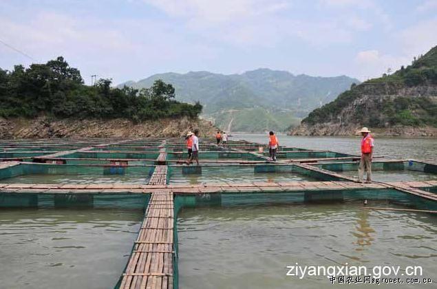 陕西省紫阳县洞河镇实现渔业产值5000万元(图)图片