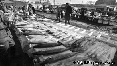 辽宁沈阳市场带鱼价格上涨三成