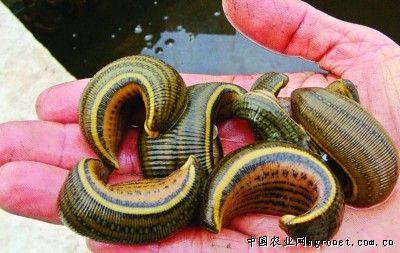 漂亮的蛇图片大全可爱