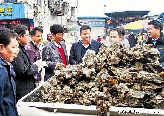 广东湛江市麻章区区长林洪到霞山水产市场叫卖生蚝(图图片