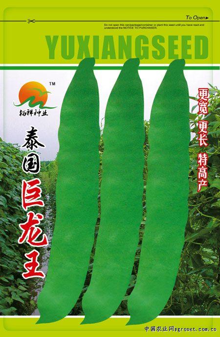 泰国巨龙王—菜豆种子