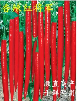 线椒种子--香辣红将军