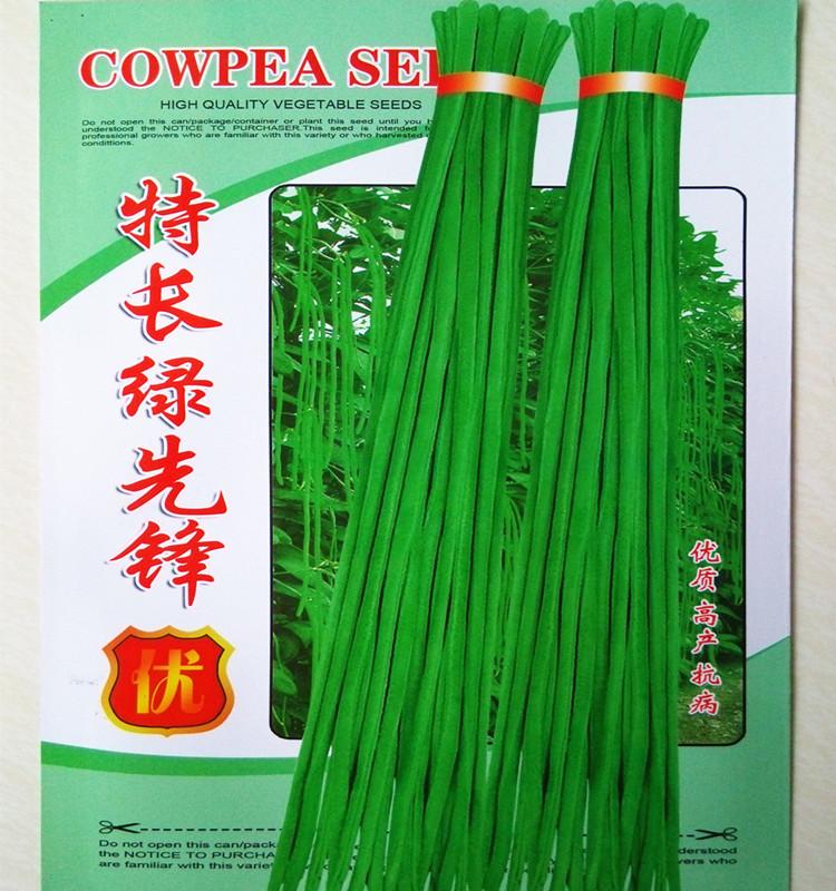 特长绿先锋豇豆种子