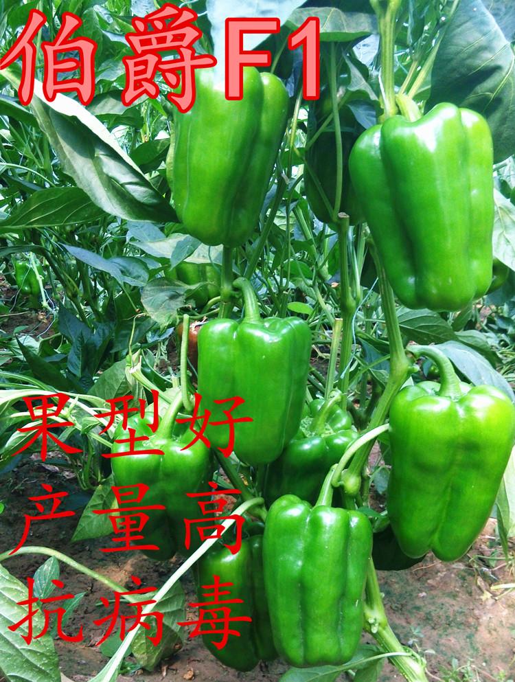 太空椒伯爵种子种苗—甜椒种子