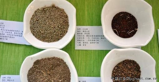 四p种子图片_湖南全省寻找蔬菜老种子 让食客品味正宗老味道(图)