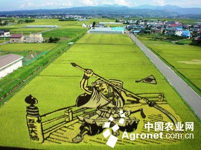 日本农产品或出口中国港台(图)