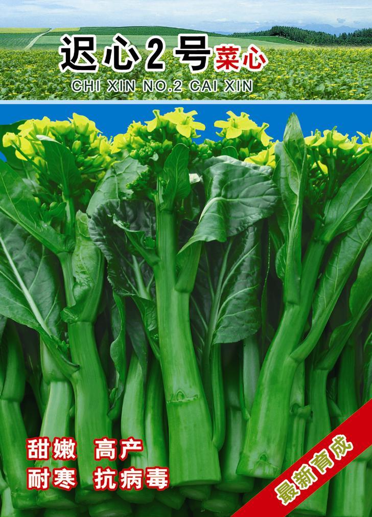 供应迟心2号菜心—菜薹种子,广州佰顺蔬菜研究所有限图片