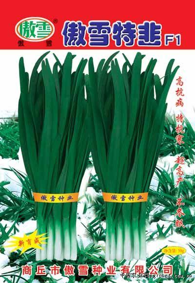 傲雪特韭—韭菜种子