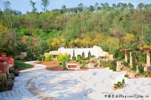 重庆 欣赏/重庆:园博园欣赏西部园林的戈壁红柳(图)