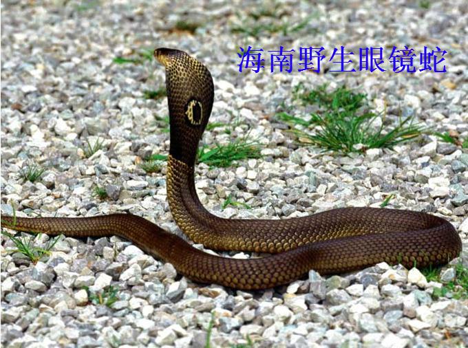 捕蛇最厉害的动物