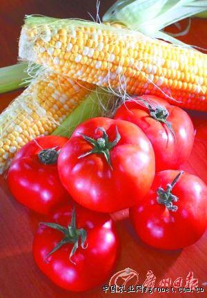 万农网:市区稳定冬季蔬菜供应