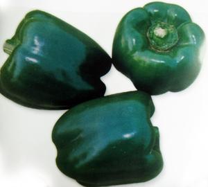美星—甜椒种子