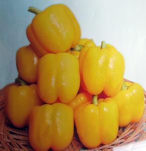 金華星-甜椒種子
