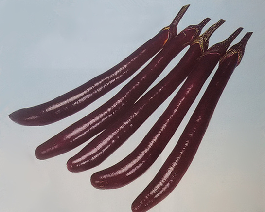 紫冠——茄子种子