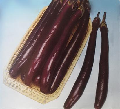 秀娘——茄子种子