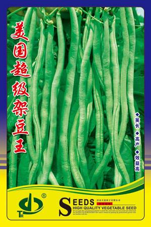 美国超级架豆王—菜豆种子