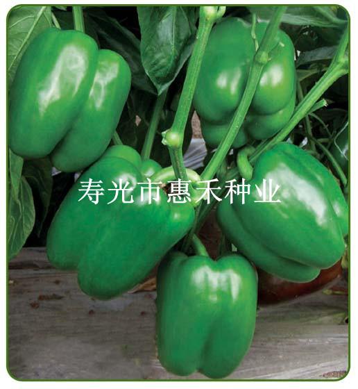 先锋308—甜椒种子