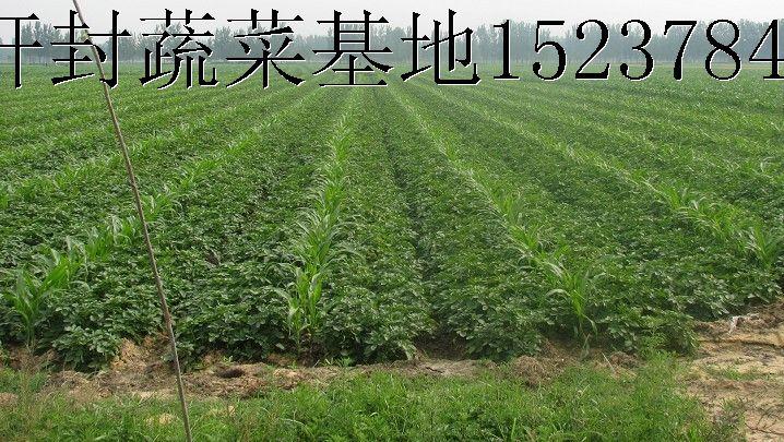 企业相册 - 幻灯片模式 - 开封市通许蔬菜种植基地