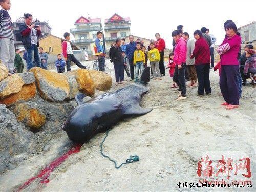 http://www.k2summit.cn/yishuaihao/939136.html