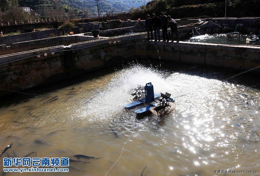 发展特色水产养殖业_云南曲靖会泽特色水产养殖业助经济增长图农