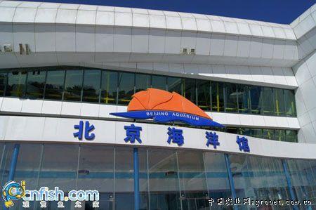 北京海洋馆,坐落在北京动物园内长河北岸,南倚长河,毗邻北京展览馆.