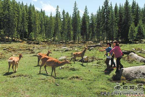 梅花鹿等野生动物逐年增加