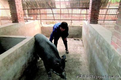 特种野猪猪舍结构图