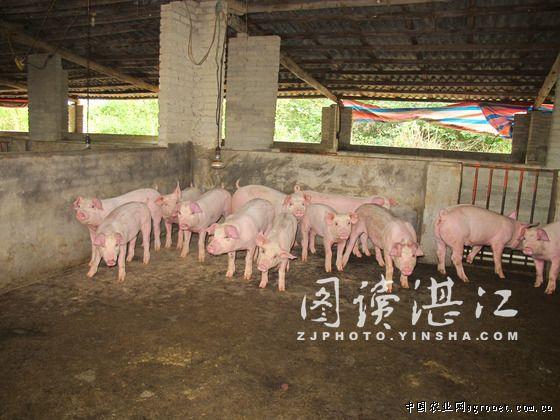 该基地养殖小猪