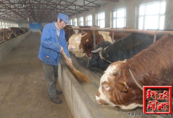 占地面积26000平方米,建筑面积7000平方米的麻山英杰养牛专业合作社