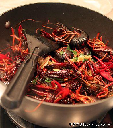 葱姜红烧小龙虾的制作步骤