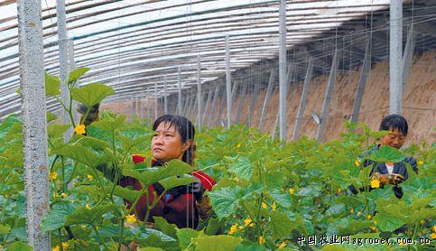 大同农业生产结构