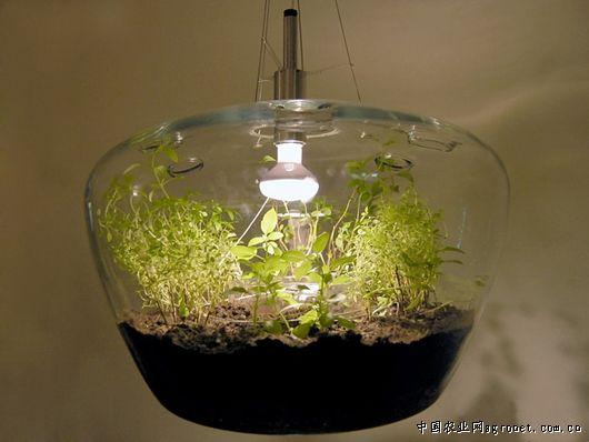 中国农业网首页 农业科技 > 创意设计玻璃温室盆栽吊灯(图)    由捷克图片