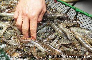 渤海海鱼种类及图片