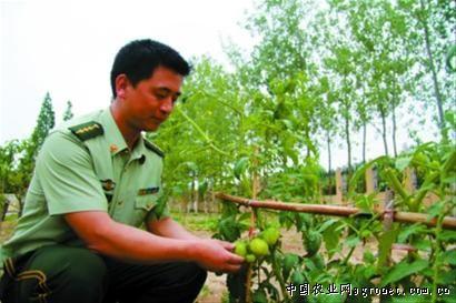 """在黄海滩涂养猪种菜的""""上海兵""""(图)"""